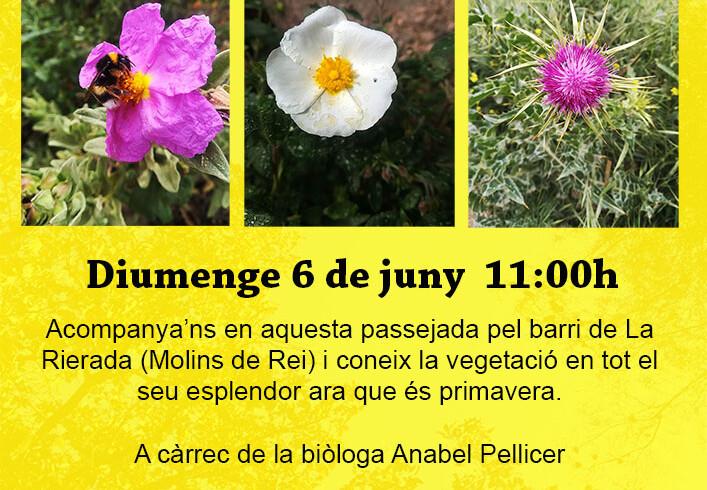 passejades botaniques juny